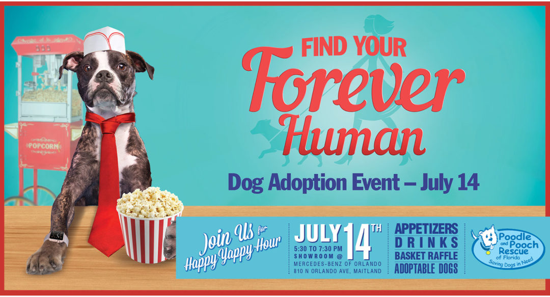 Dog Rescue Photo Illustration and Banner Design Popcorn