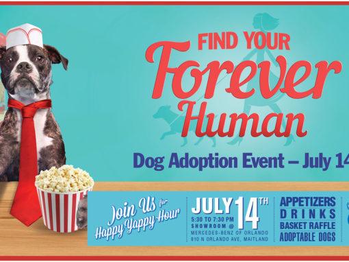 Dog Rescue Photo Illustration and Banner Design Popcorn